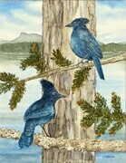 Steller's Jays at Cowichan Bay